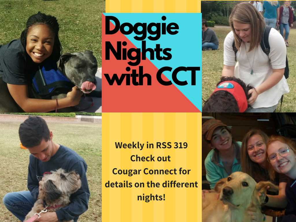 Therapy Dog Night